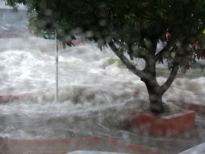 The arroyo at the corner of CR 47, our street, and CL 85, the nearest cross-street. The wall that is submerged behind the tree is probably five feet tall.